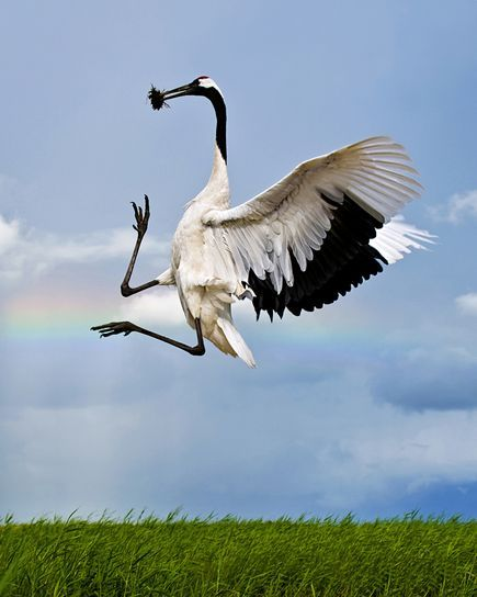 Best Rare-Bird Pictures of 2010 Named            via  news.nationalgeographic.com        I really like the Asian Crested Ibis as well…