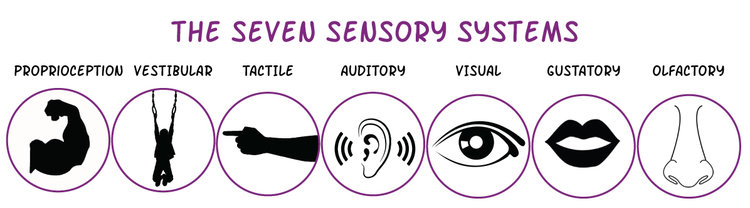 Image result for sensory systems
