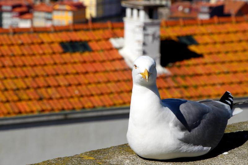 25-2015-03-07 Oporto Portugal (117).jpg