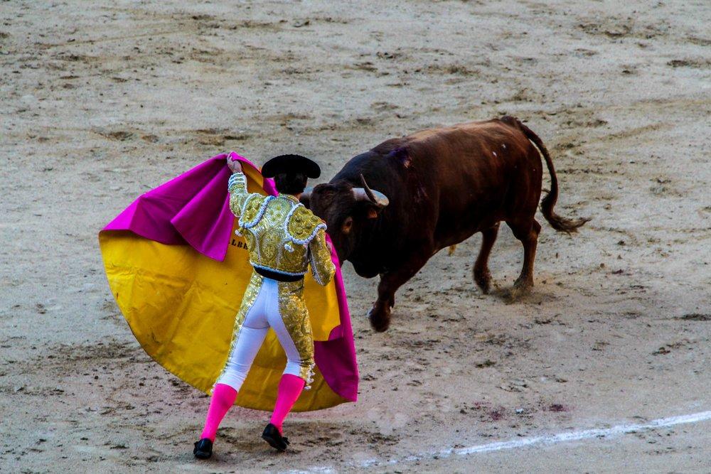 n.b.: I did go. I did hate it. And I always, always cheer for the bull.