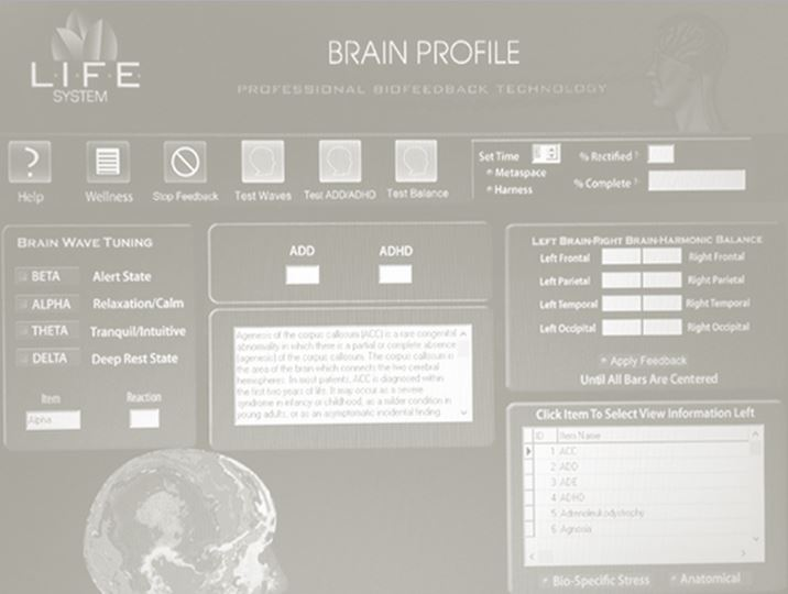 Brain Profile.JPG