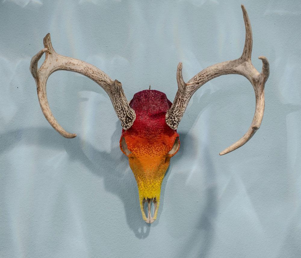 Deer2150118_14.jpg