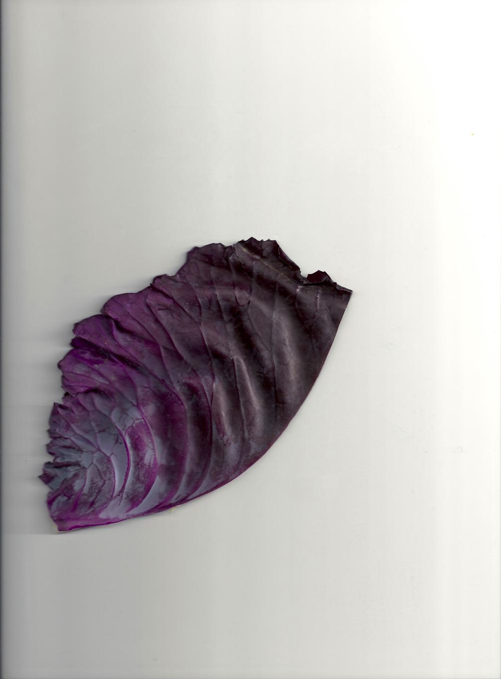 Chou violet 02 .jpg