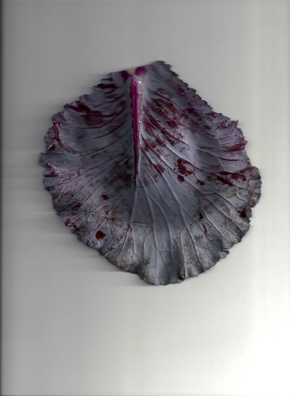 Chou violet 01e.jpg