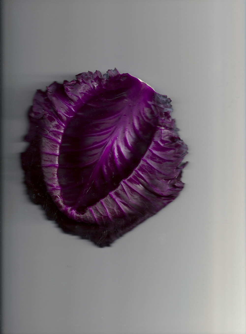 Chou violet 04.jpg
