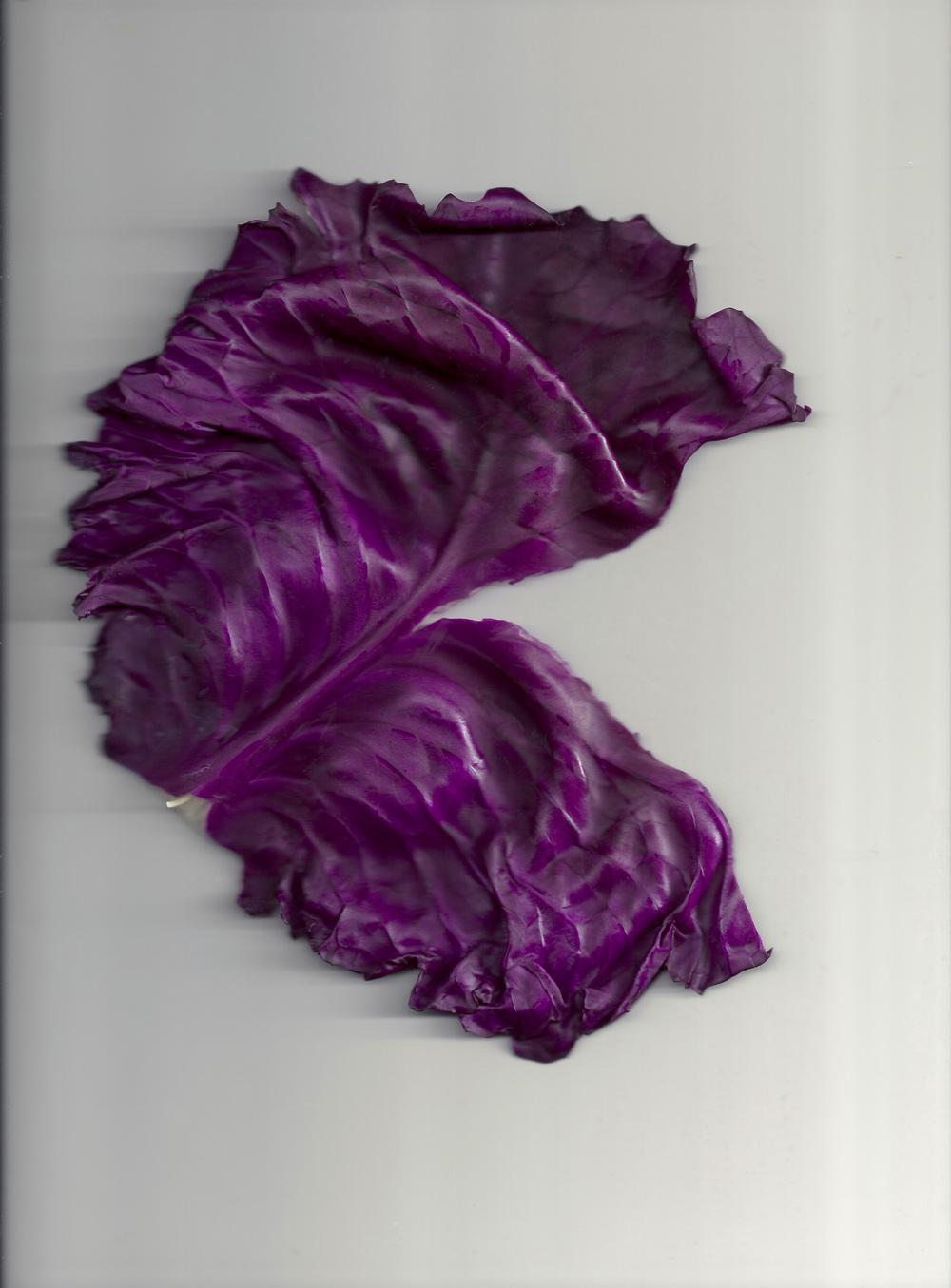 Chou violet 05.jpg