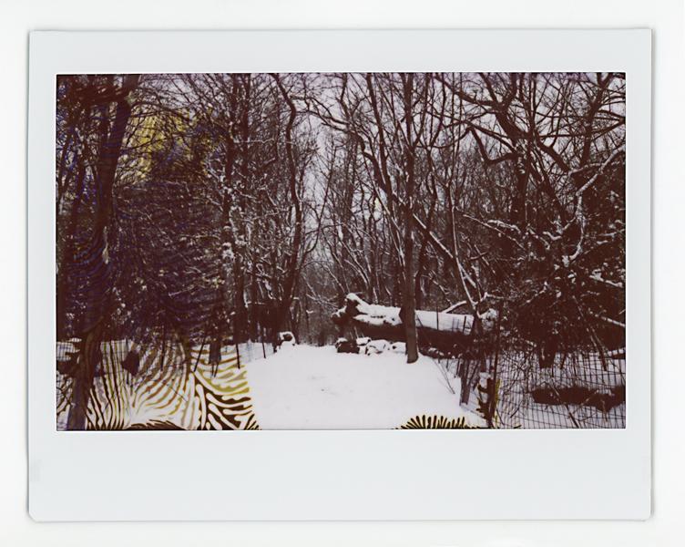 03.02.19 Prospect Park 010 copy.jpg