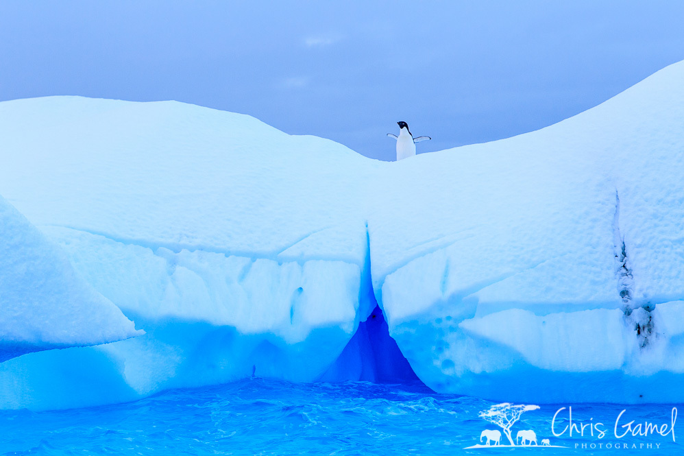 Riding an Iceberg