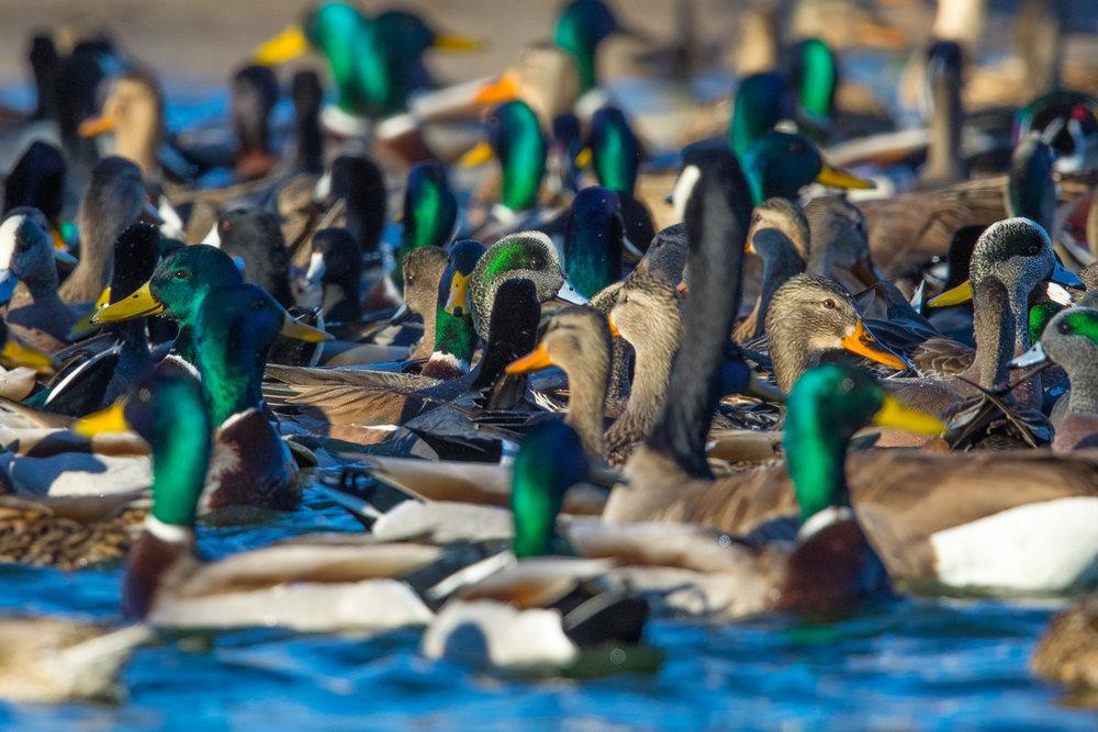 Birds on the Breadline.