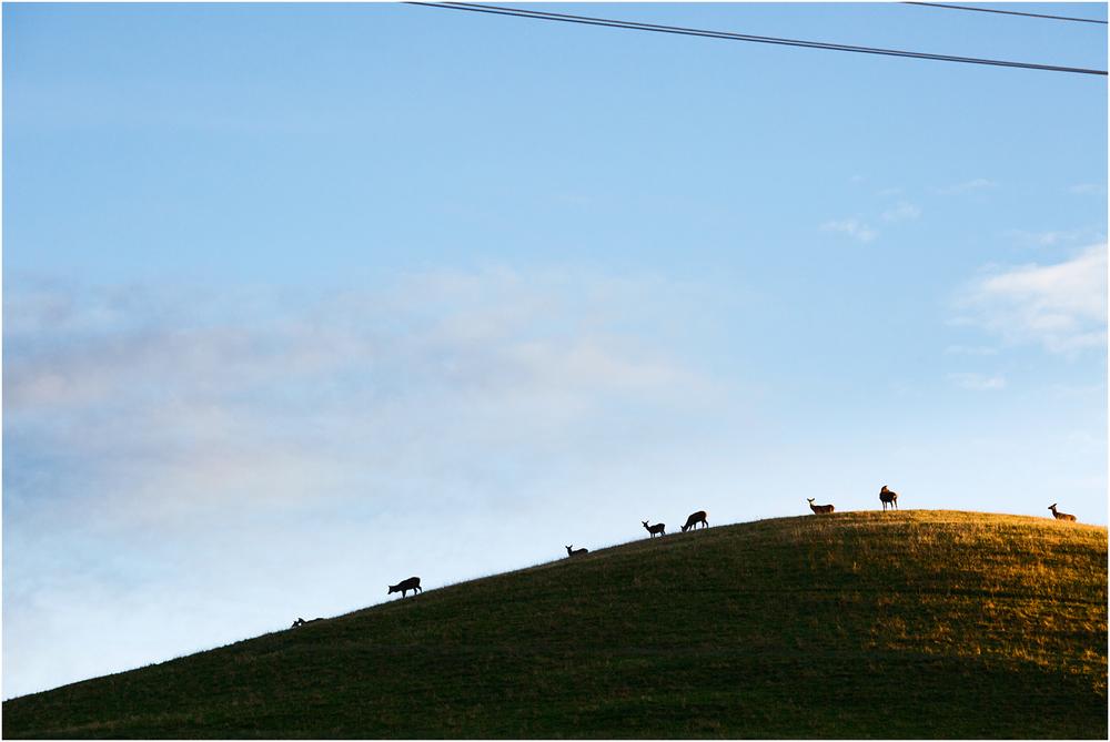 The Coromandel - NZ
