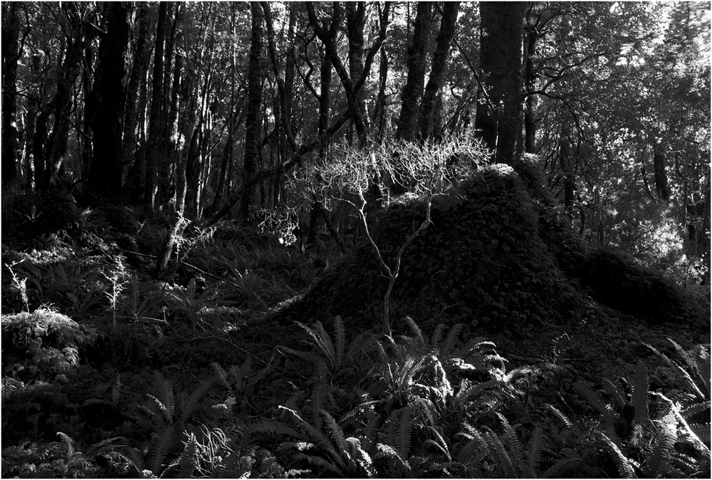 Barton Track - Tararua Forest Park