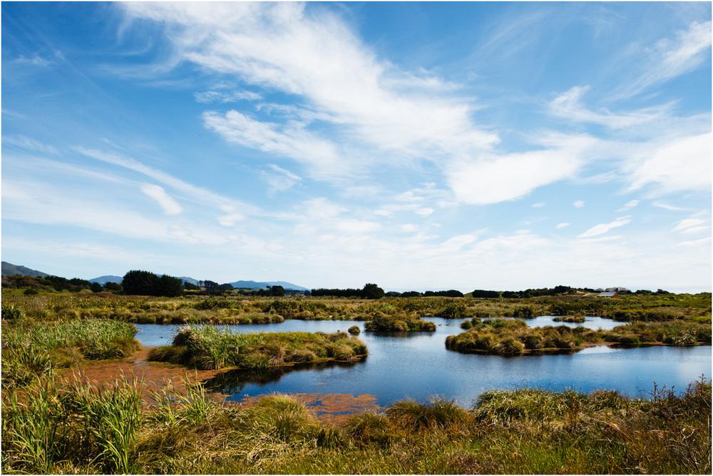 Te Horo Wetlands