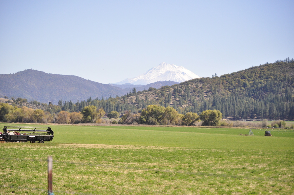 Scott Valley with Mt. Shasta in the background.