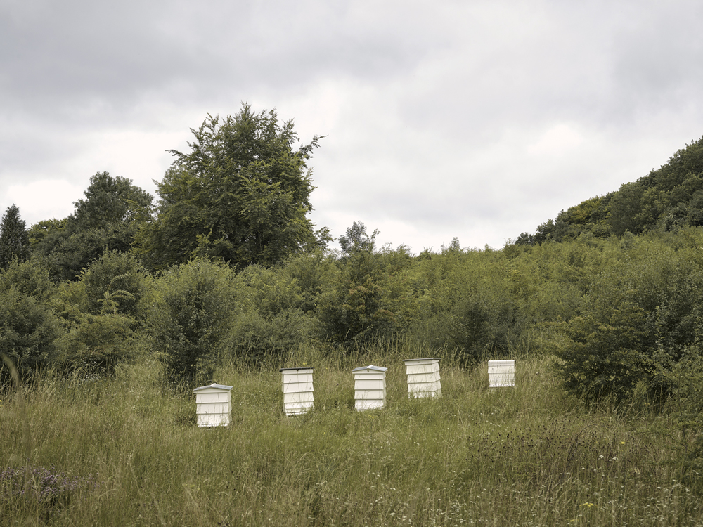 A series of hives on James's Surrey bee farm.
