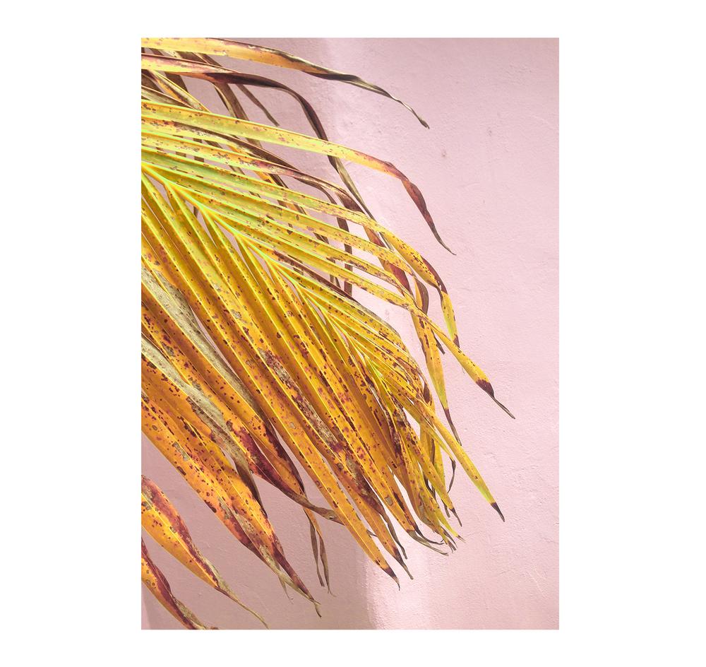Palmeria personal photo series
