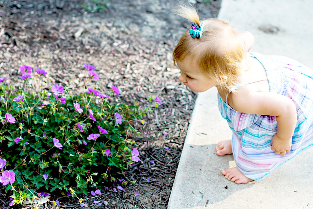 Baby Dockermeyer, stops to smell some flowers during her family photography session in Kokomo, Indiana.