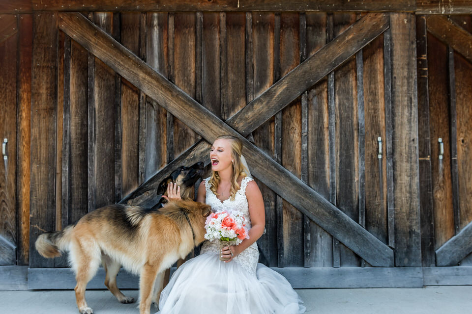 419Avon-Wedding-Country-Dogs.JPG