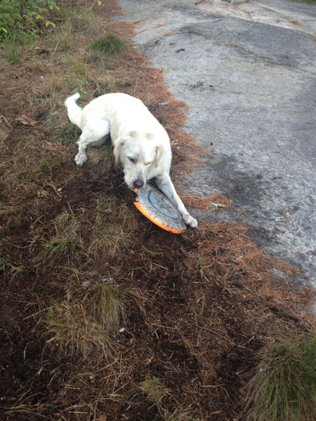 Frisbee? Now that's fun!