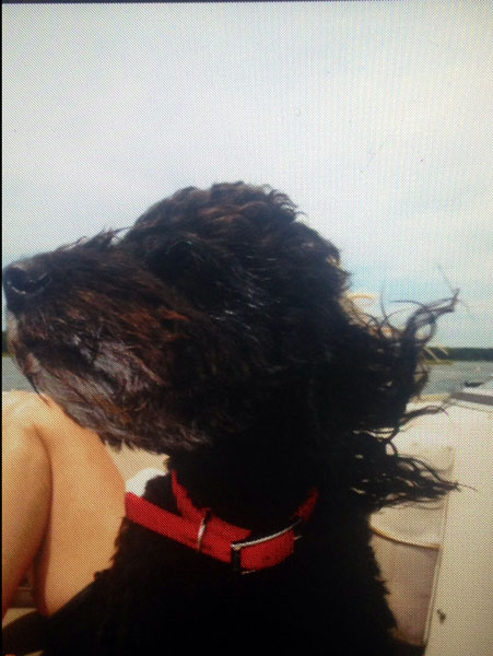 Bella likes the feeling of the wind in her hair.