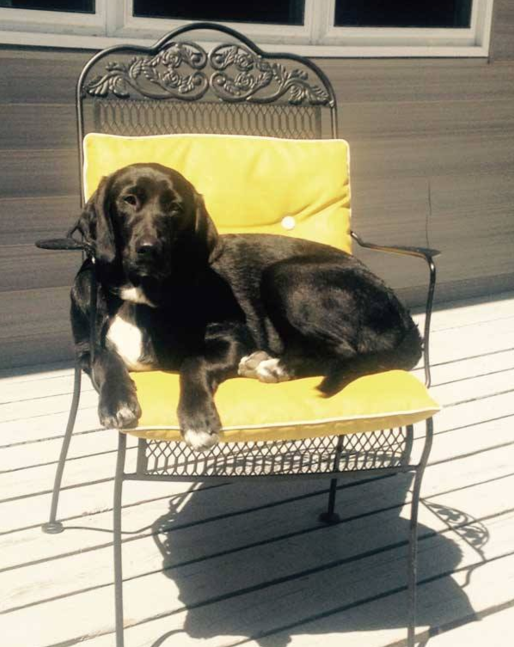 Sunning in a chair ...