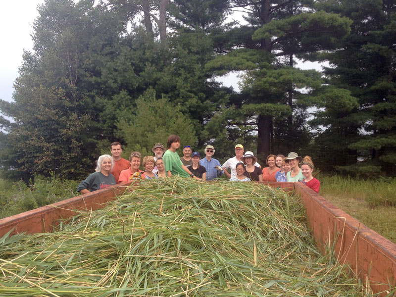 Phragmites_Eradication_Volunteers.jpg