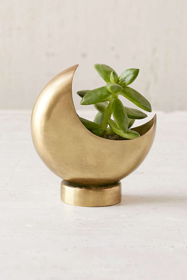 Upgrade your succulent storage with this bad thing  Half Moon Planter / Urban Outfitters / $14