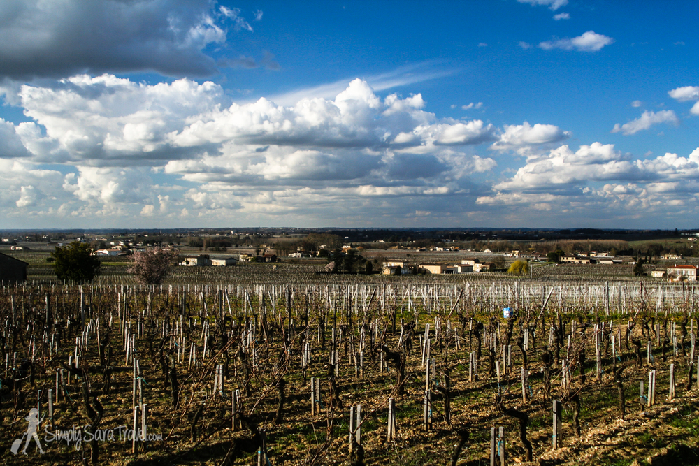 Vineyards of family-run winery, Chateau Champion, St. Emilion, France