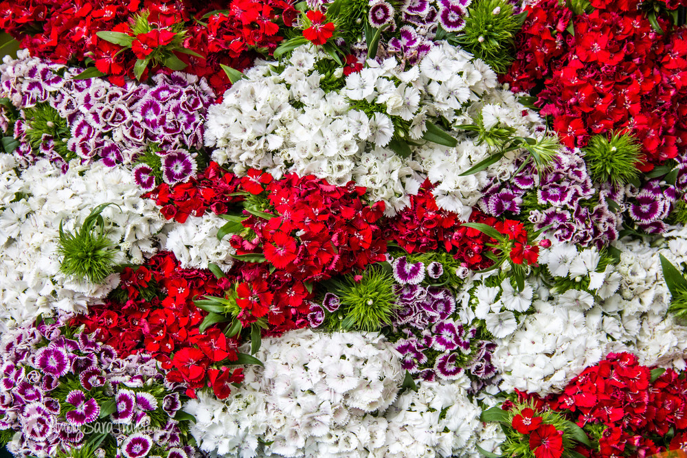 Flowers at the Bastille market, Paris