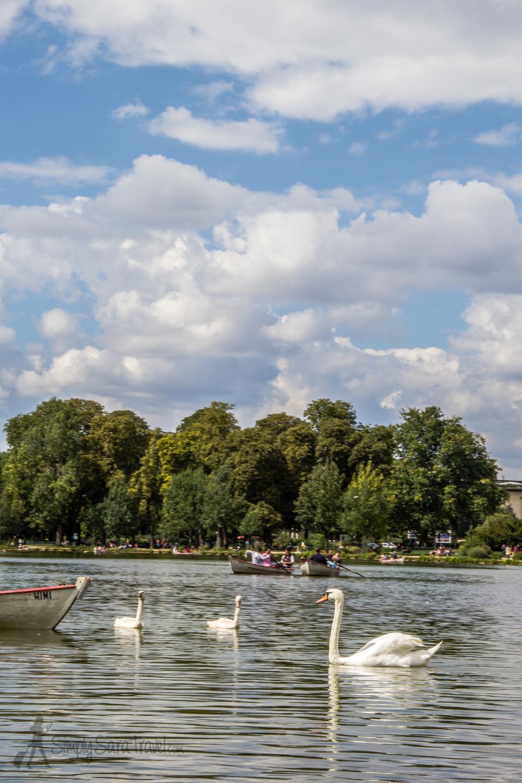 Swans on Lac Daumesnil, Paris