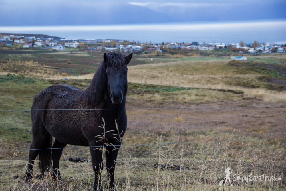 We saw lots of beautiful Icelandic horses too along the way.
