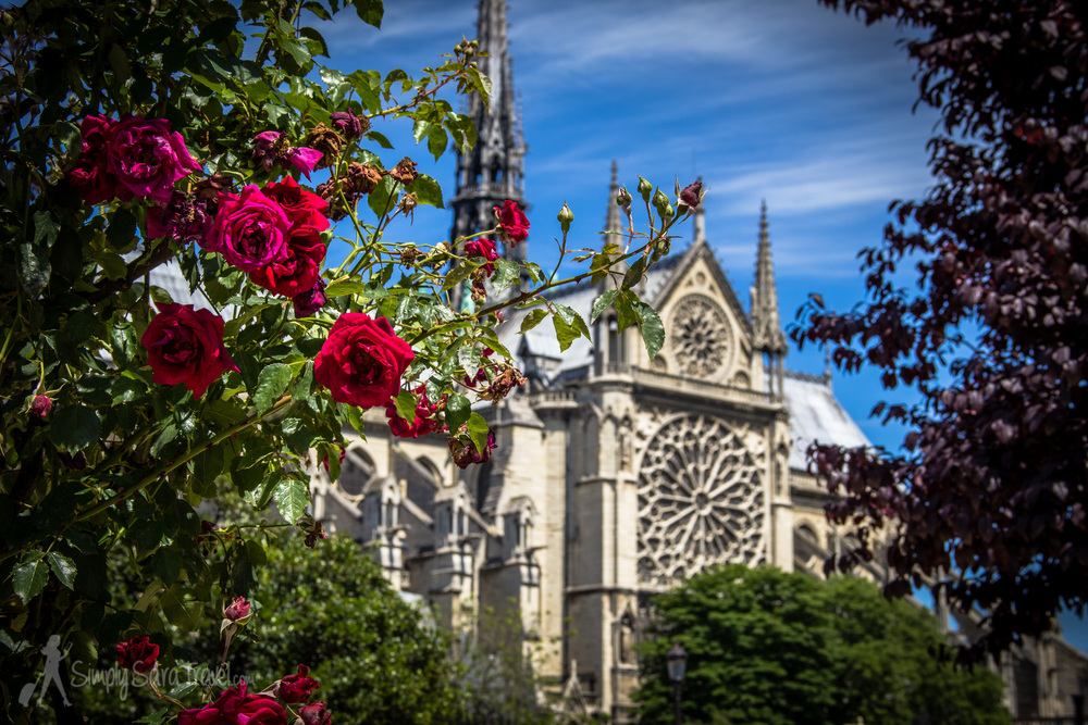 Roses and Notre Dame Cathedral, Paris, France