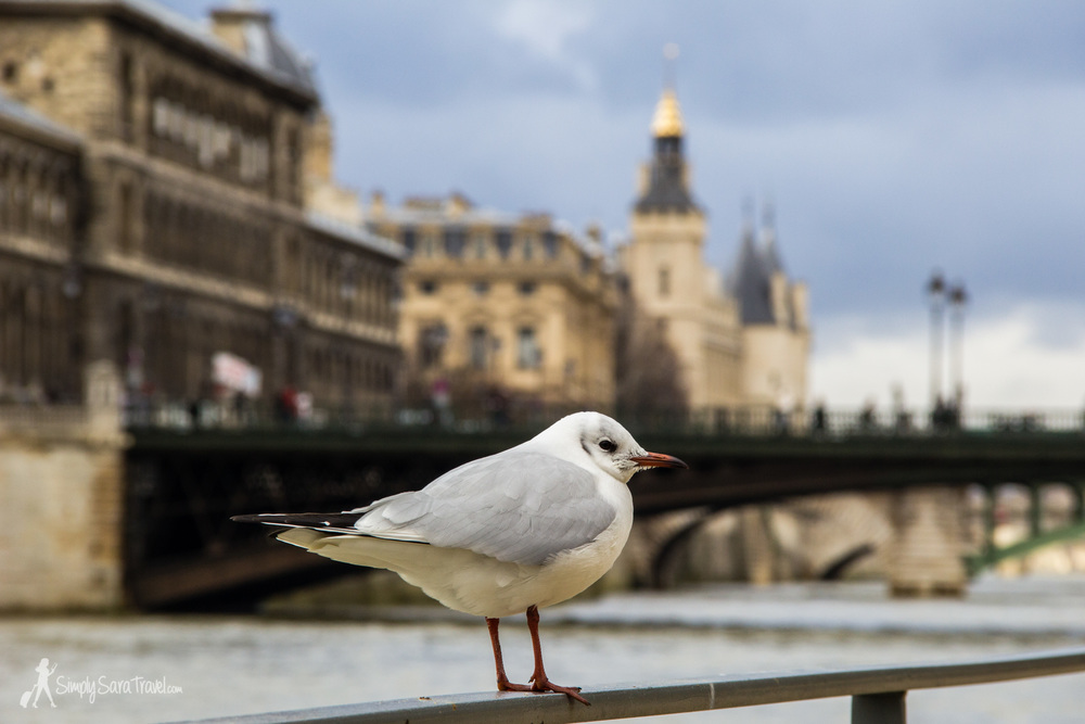 Bird on the Seine river in Paris, France