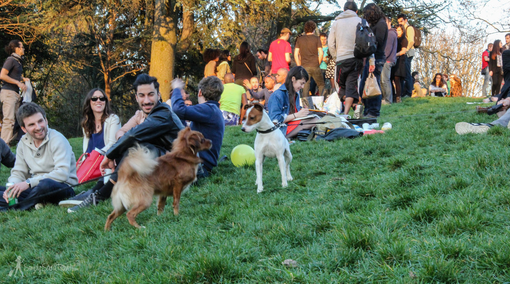 There are always adorable furry friends to watch in Parc des Buttes-Chaumont!