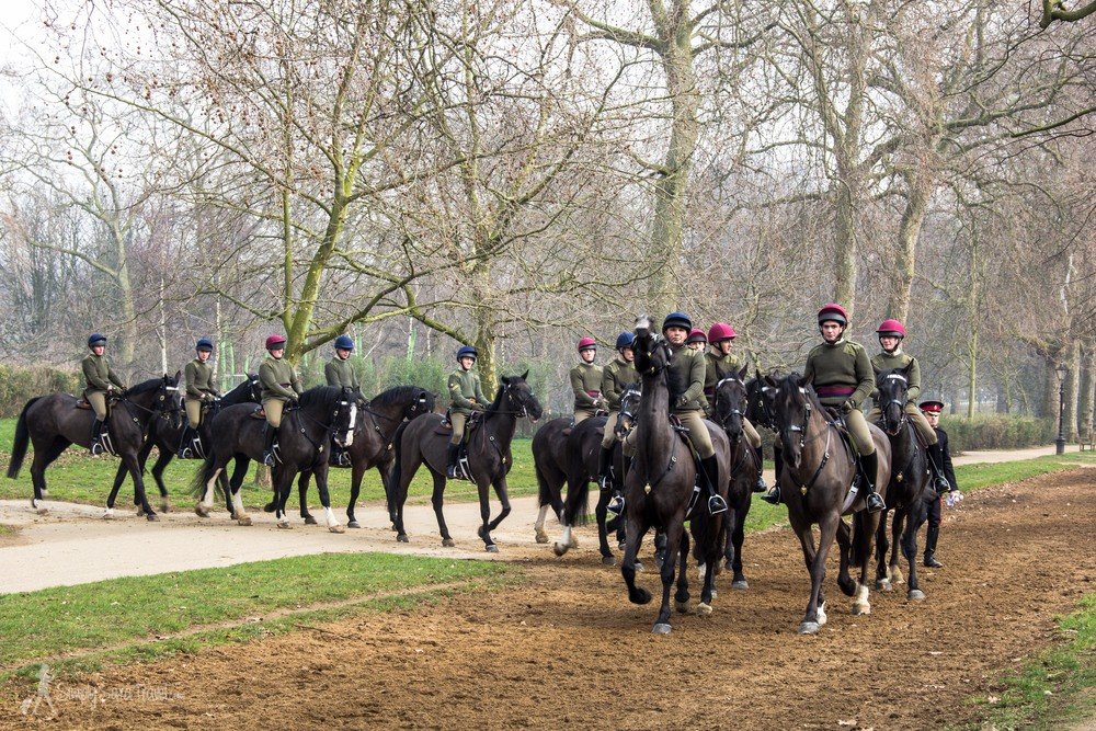 Walking around London by myself always feels like an adventure where anything can happen - like this time I ran into the cavalry training.