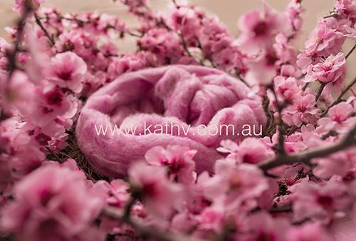 Nest Blossoms - Backlit Darker.jpg