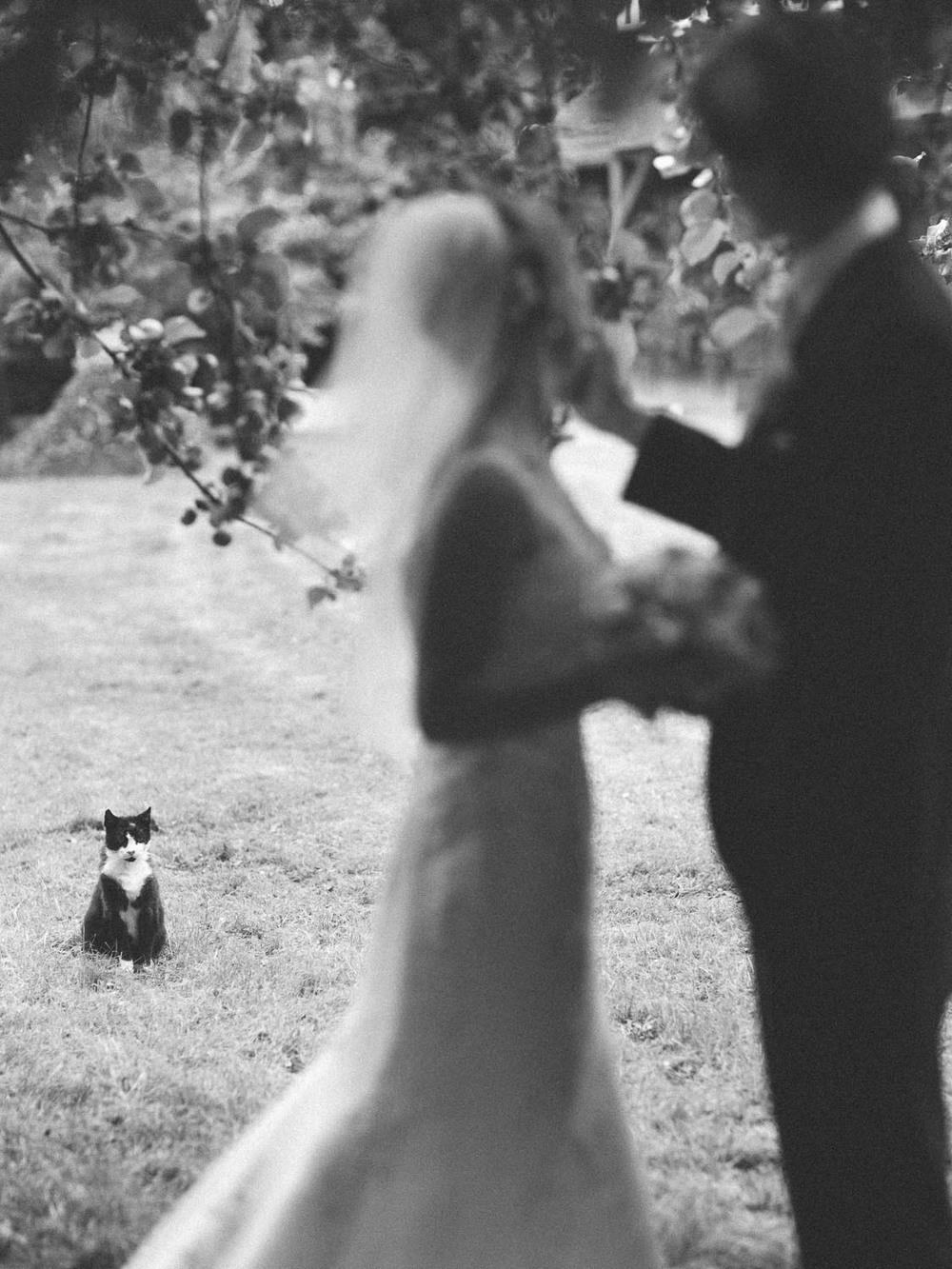 Hochzeitspaar Katze Schlemmin