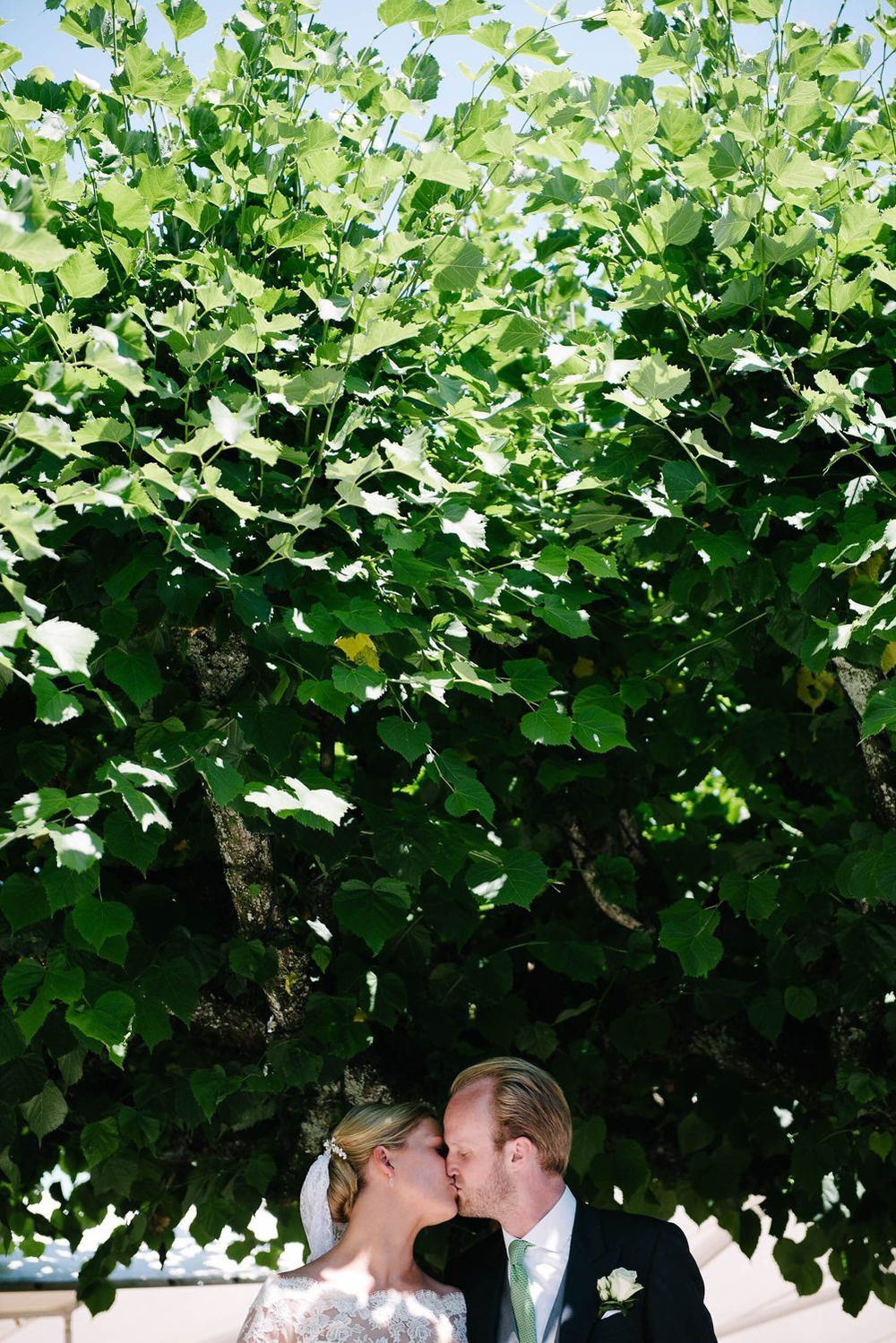 Kuss unter einem jungen Baum