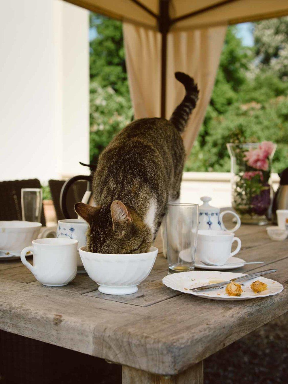 Katze Gutshaus Klein Nienhagen