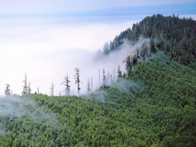 Cascadia Forests
