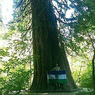 Cascadia in the Trees