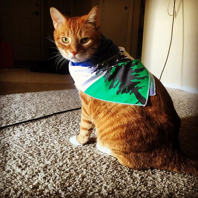 Cascadian Cat