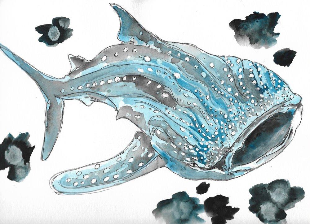 Whale Shark 9x12in..jpg