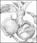 KB_Draw4_150x175.jpg