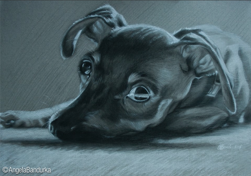 """Oliver"" Charcoal on paper, (c) Angela Bandurka, 2014"