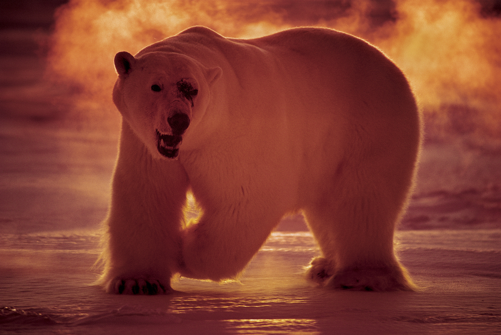 Paul Nicklen_0013.jpg