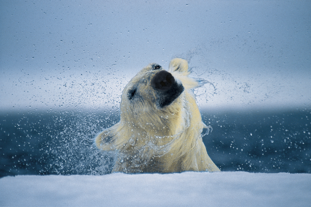 Paul Nicklen_0012.jpg