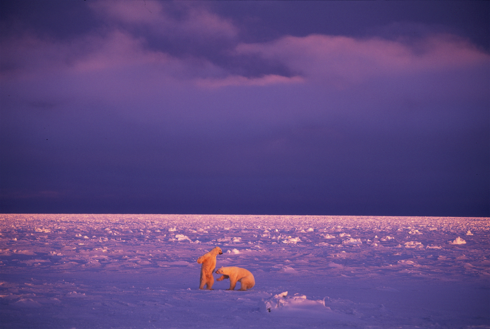 Paul Nicklen_0023.jpg