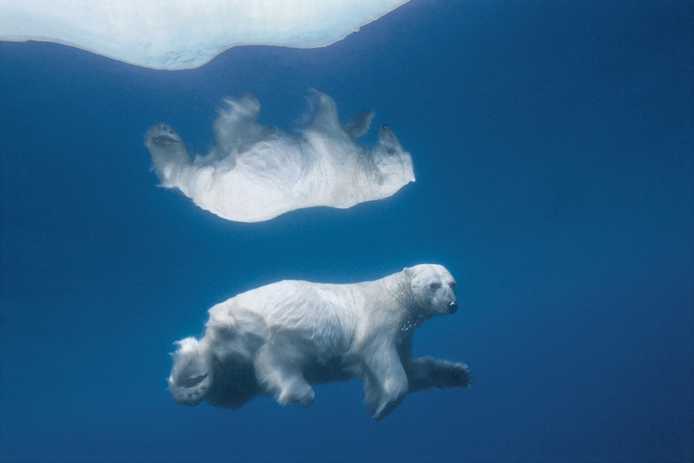 Paul Nicklen_0008.jpg