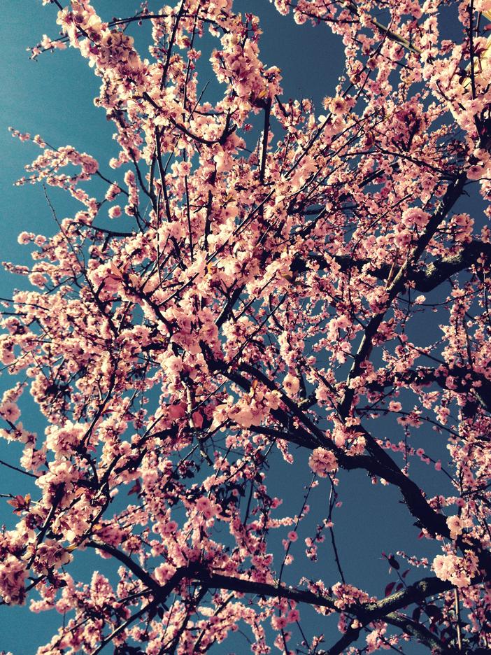 Spring, 春