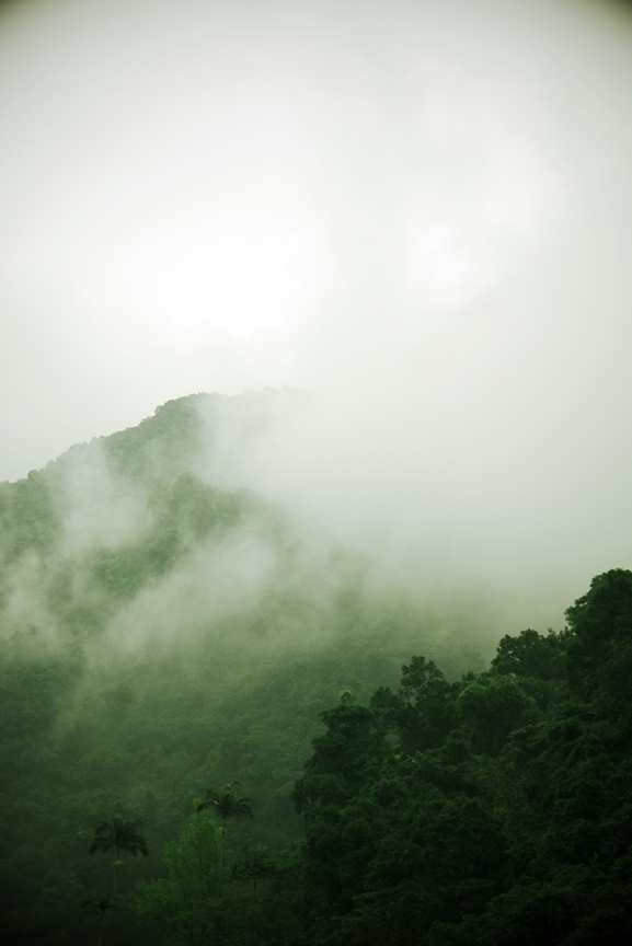 Honoring Opa    Sadly, the dear spirit of my Opa has now parted with this lifetime.  On this day I found myself in the mountains of Taiwan meditating on the mist which seems to dance with the tree tops, it is the kind of sight I know would bring him much joy.